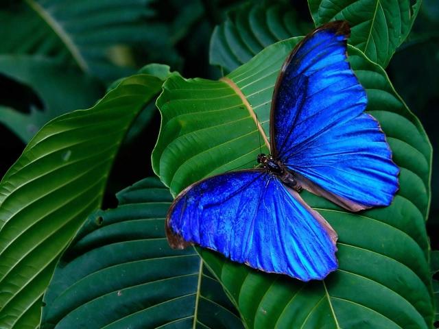 Tropics_butterfly-640