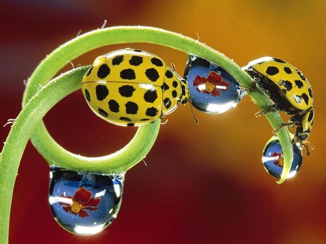 Yellow_Ladybird-640